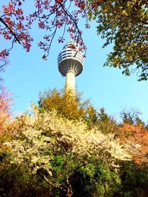 矗立在众樱花之中的大邱塔